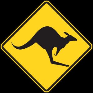 Tier Känguru australien