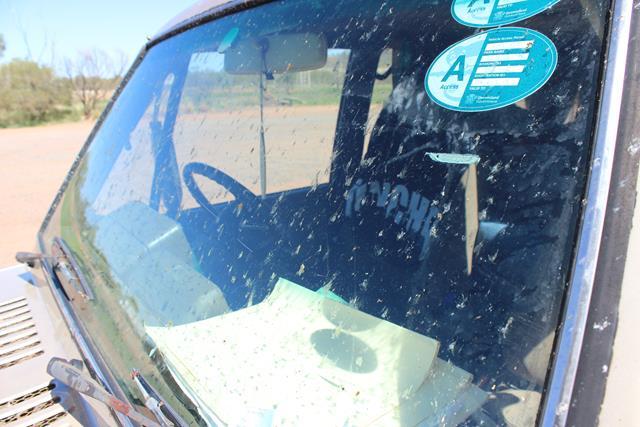 Insekten mindern Sicht auf Roadtripp